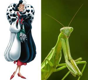 Cruella de Vil Praying Mantis